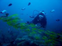 Zambullidor del acuario imagen de archivo libre de regalías