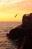 Zambullidor del mar en Mazatlan fotos de archivo