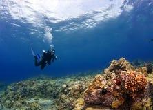 Zambullidor que controla hacia fuera el coral en Hawaii Imagen de archivo libre de regalías