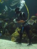 Zambullidor tropical de los pescados Imagen de archivo libre de regalías