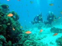 Zambullidor y coral Imágenes de archivo libres de regalías