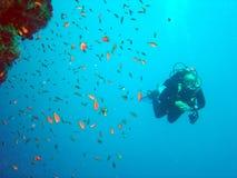 Zambullidor y coral Imagen de archivo libre de regalías