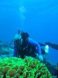 Zambullidor y coral de equipo de submarinismo Fotografía de archivo libre de regalías