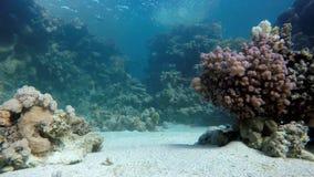 Zambullidor y pescados Pescados exóticos almacen de video