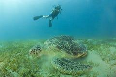Zambullidor y tortuga de equipo de submarinismo Fotografía de archivo