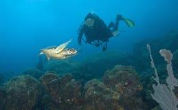 Zambullidor y tortuga de mar, St Lucia Imagen de archivo libre de regalías