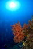 Zambullidores de equipo de submarinismo con el coral suave Imagenes de archivo