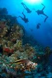 Zambullidores de equipo de submarinismo que exploran Fotos de archivo libres de regalías