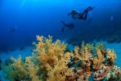 Zambullidores de equipo de submarinismo que exploran Foto de archivo libre de regalías