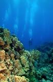 Zambullidores de equipo de submarinismo que nadan hacia el filón foto de archivo libre de regalías