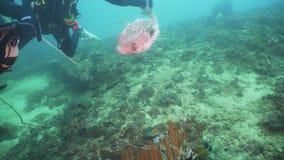 Zambullidores de equipo de submarinismo subacuáticos Filipinas, Mindoro metrajes