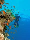 Zambullidores en el filón coralino Fotografía de archivo libre de regalías