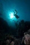 Zambullidores silueteados sobre un filón coralino Foto de archivo libre de regalías