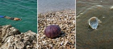 Zambullidores y sus trofeos marinas (collage) imagen de archivo
