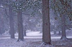 zamieć śnieg Zdjęcia Royalty Free