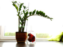 Zamioculcas and Jar with Baubles. Zamiculcas in the Vase and a Jar with Christmas Baubles on the Side Stock Images