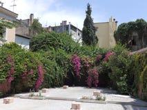 zamknięci wiśnia kwiaty uprawiają ogródek czerwonej wiosna tulipany w górę biel zdjęcie royalty free