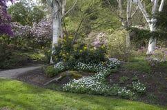zamknięci wiśnia kwiaty uprawiają ogródek czerwonej wiosna tulipany w górę biel Zdjęcie Stock