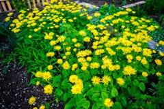 zamknięta kwiatów ostrości miękka część w górę kolor żółty Zdjęcie Stock