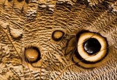 zamknięta motyl sowa zamknięty uskrzydla Obrazy Stock