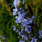 Zamknięta roślina Zdjęcie Royalty Free