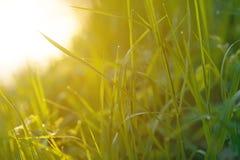 zamknięta rosa opuszcza świeżej trawy świeży Fotografia Stock