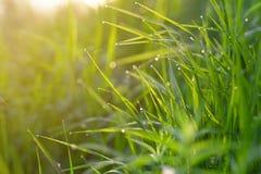 zamknięta rosa opuszcza świeżej trawy świeży Obrazy Stock