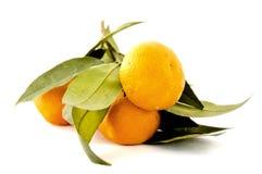 zamknięta wiązki pomarańcze Zdjęcie Stock