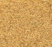 zamknięta wysokość obgotowywający postanowienia ryż obgotowywać Zdjęcia Stock