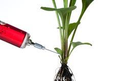 zamknięta zielonej rośliny strzykawka zielony Zdjęcie Royalty Free