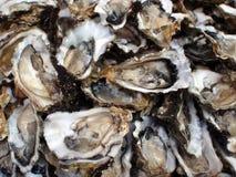 zamknięte przyrodnie ostrygi łuskają przyrodni Zdjęcia Stock