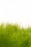 zamkniętego rosy kropelek trawy liść ranek zamknięta woda Zdjęcie Royalty Free