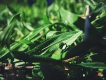 zamkniętego rosy kropelek trawy liść ranek zamknięta woda obrazy stock