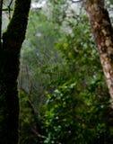 zamkniętego rosy kropelek trawy liść ranek zamknięta woda Olśniewająca woda opuszcza na spiderweb nad zielonym lasem Fotografia Royalty Free
