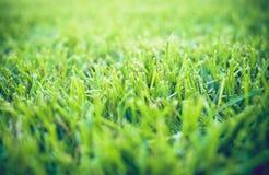 zamkniętej świeżej trawy gęsty up Fotografia Stock