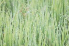 zamkniętej świeżej trawy gęsty up Obrazy Stock