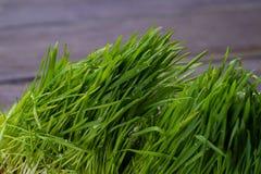 zamkniętej świeżej trawy gęsty up Obraz Stock