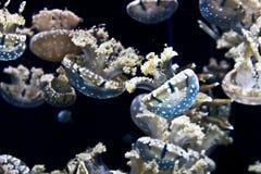 zamknięty jellyfish zamknięty morze Obrazy Stock