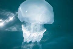 zamknięty jellyfish zamknięty morze zdjęcia stock