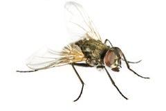 zamknięty komarnica zamknięty koń fotografia stock