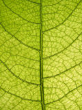 zamknięty liść zamknięty drzewo Zdjęcie Royalty Free