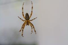 zamknięty pająk zdjęcie royalty free