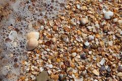 zamknięty piasków zamknięci seashells Obraz Royalty Free