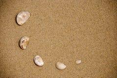 zamknięty piasków zamknięci seashells obraz stock
