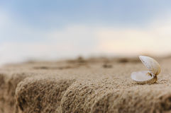 zamknięty piaska zamknięty seashell Obraz Royalty Free