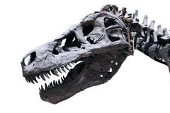 zamknięty rex zaskarża tyrannosaurus zamknięty Fotografia Stock