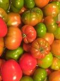 zamknięty rozsypisko zamknięci pomidory Zdjęcia Stock