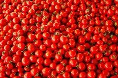 zamknięty rozsypisko zamknięci pomidory obrazy stock
