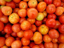 zamknięty rozsypisko zamknięci pomidory Zdjęcia Royalty Free