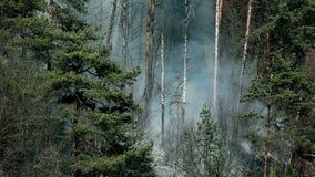 Zamknięty widok dym, katastrofa naturalna w lesie zbiory